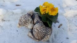 ovce osazovací,zahradní keramická dekorace